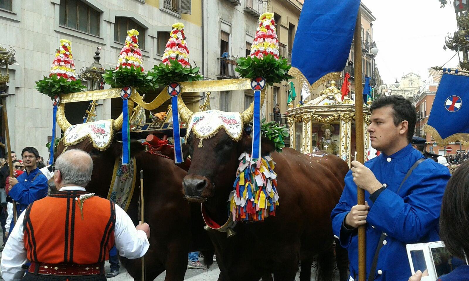 Festa di Sant'Efisio -Buoi