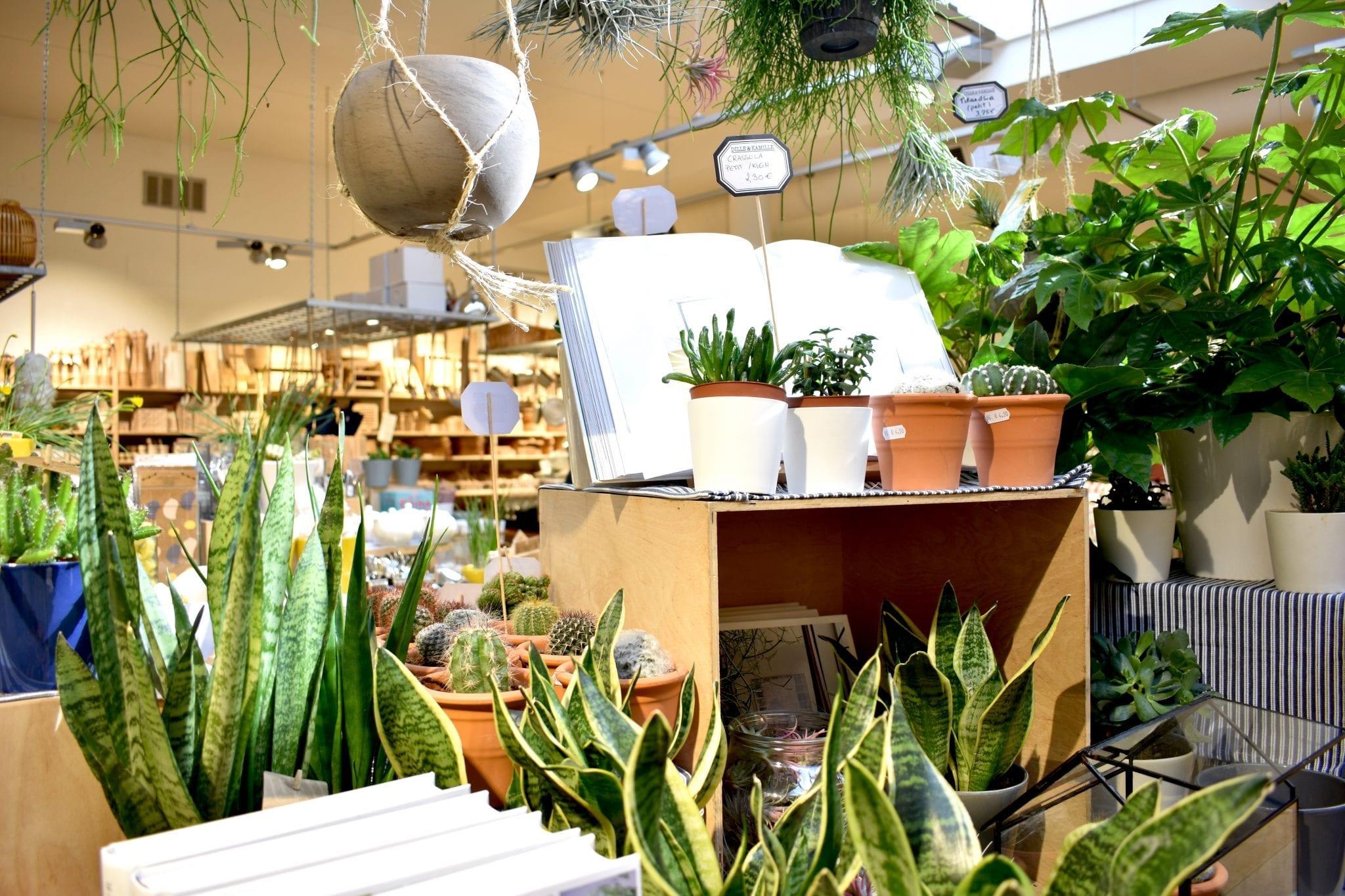 piante Dille & Kamille _Le Plume