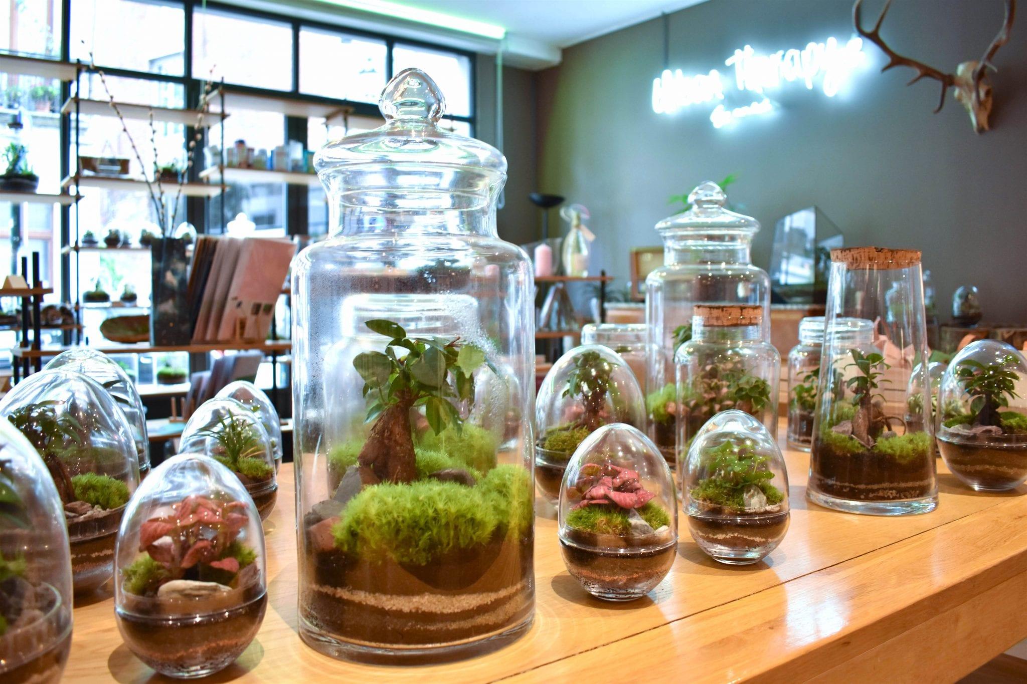 Atmosfera Botanica Urban Therapy - Bruxelles - Le Plume