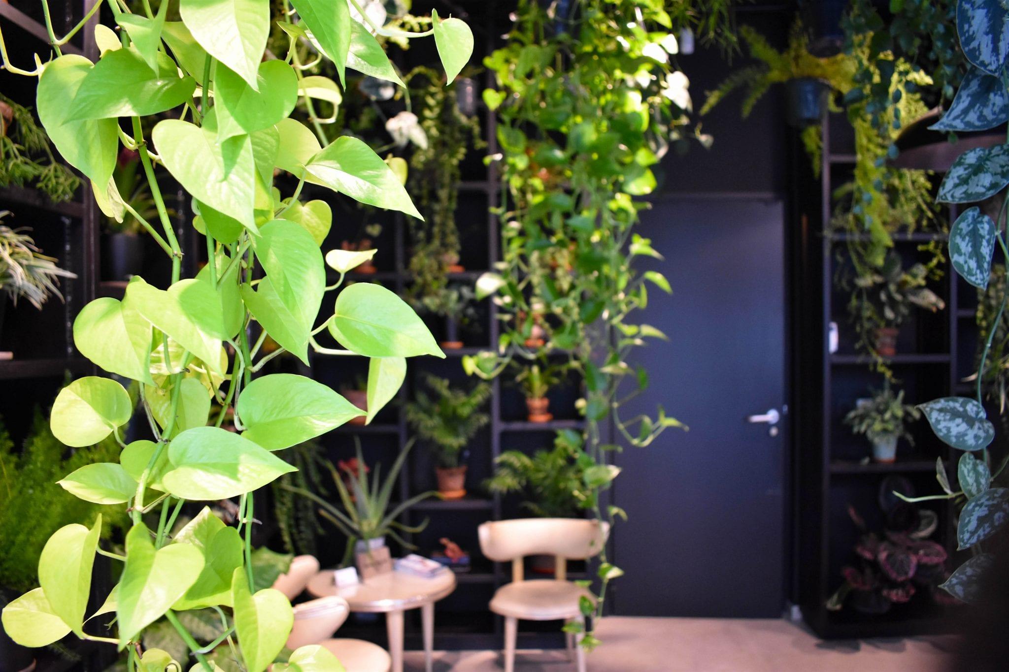 Atmosfera Botanica Jardin Secret - Bruxelles - Le Plume