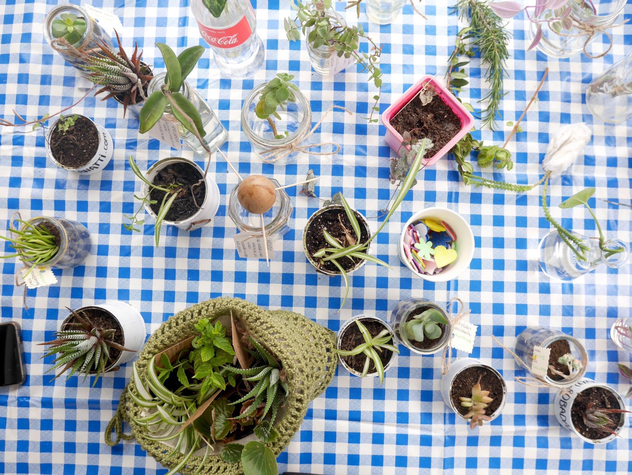 Dall'alto plant swap on board - Le Plume