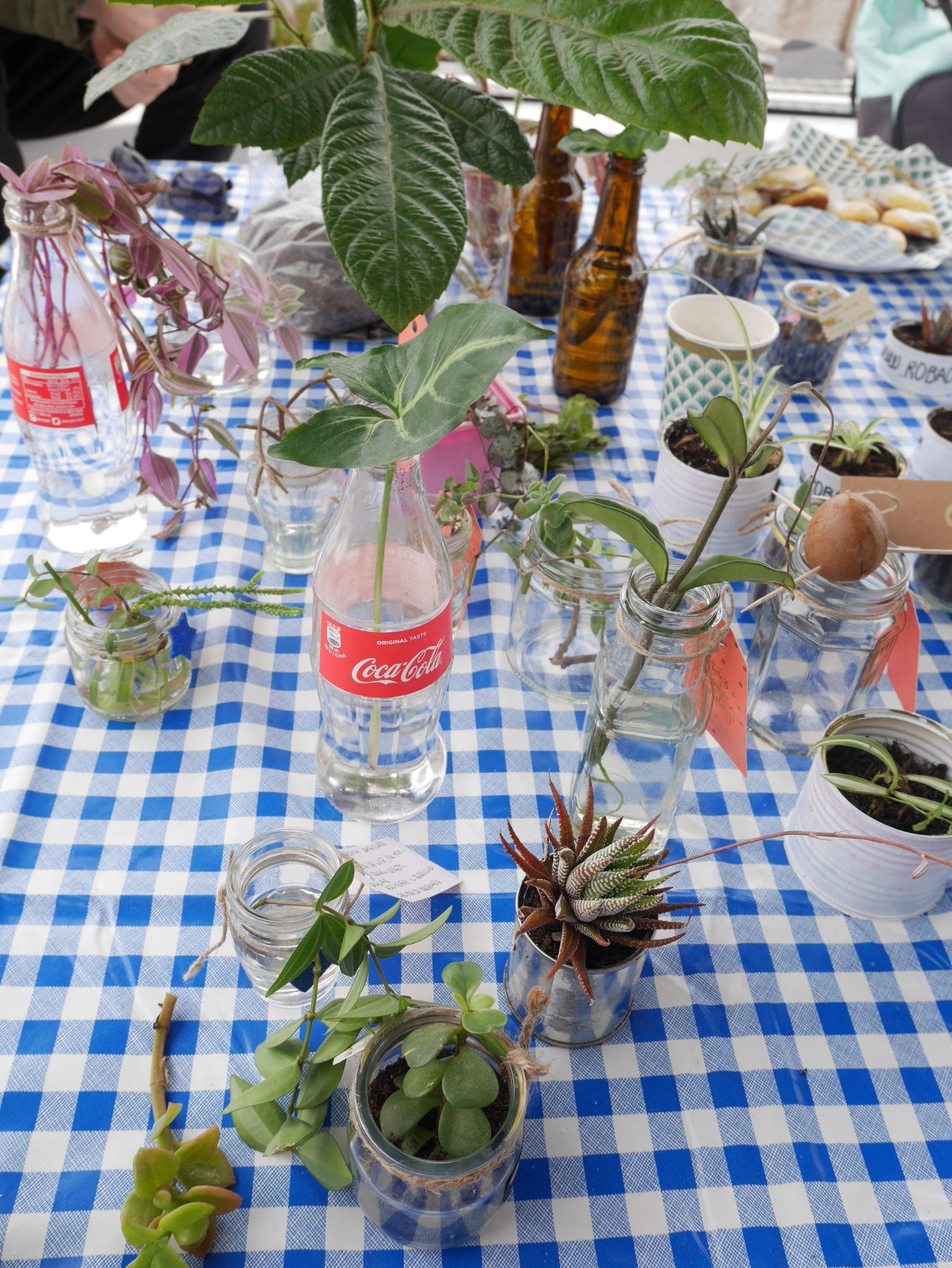 Plant Swap on board 1- Le Plume