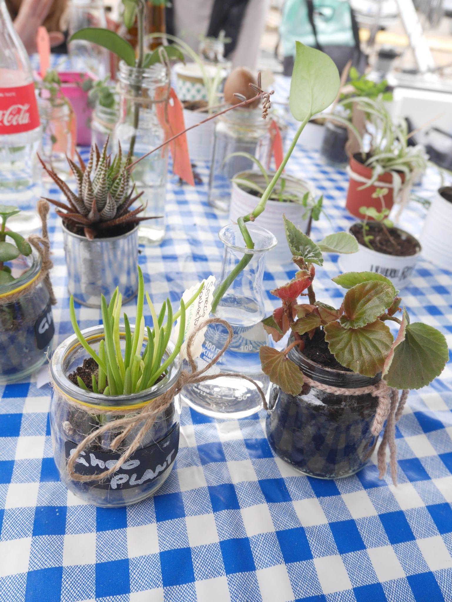 Plant swap on board 2 - Le Plume